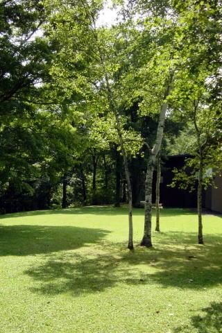照り輝く太陽と緑の木々