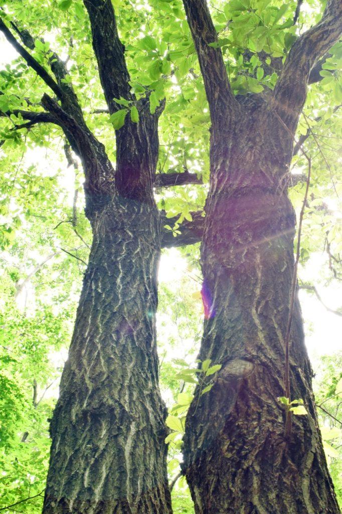 新緑の木々の木漏れ日